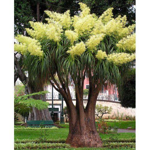 Blühende Hecke - 5 heckenpflanzen Garten Pinterest Garten - heckenpflanzen