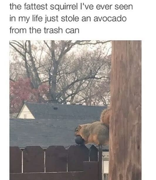Latest Funny Cute 17 Photos Only People Deeply Obsessed With Avocado Will Understand 17 Photos Only People Deeply Obsessed With Avocado Will Understand 11