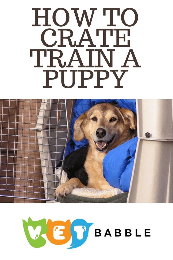 How to Crate Train Your Puppy Today