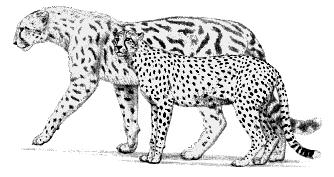 Pin by Angela Kirkpatrick on Prehistoric Felines