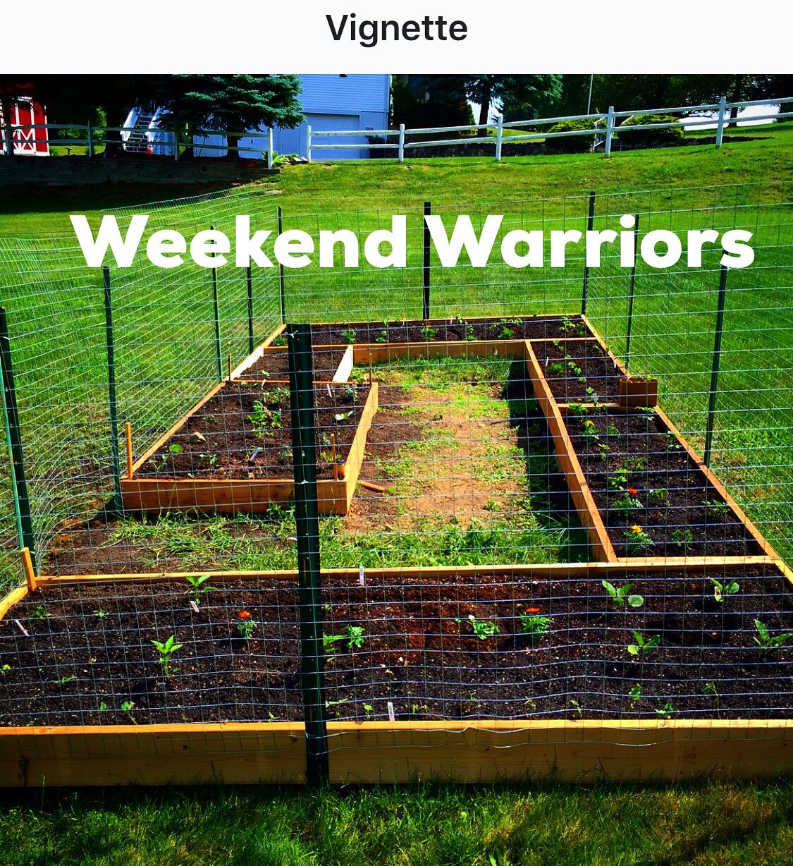 Built a RaisedBed Garden this weekend. Added composted soil & plants we started from seeds. The seeds were saved from foods & flowers we grew organically last season