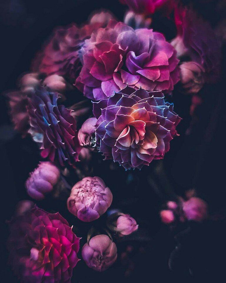 Цветы | Цветочные фоны, Цветы, Пейзажи