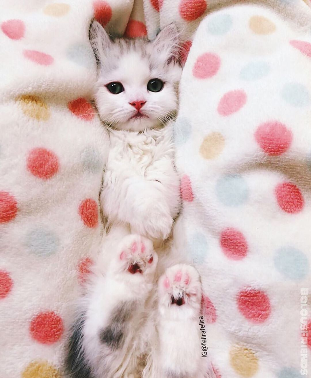 7 499 Begenme 76 Yorum Instagram Da Cats Catfeatures Balous Friends Luu Photo By Felirafelira C O N G In 2020 Cute Cats Baby Cats Kittens Cutest