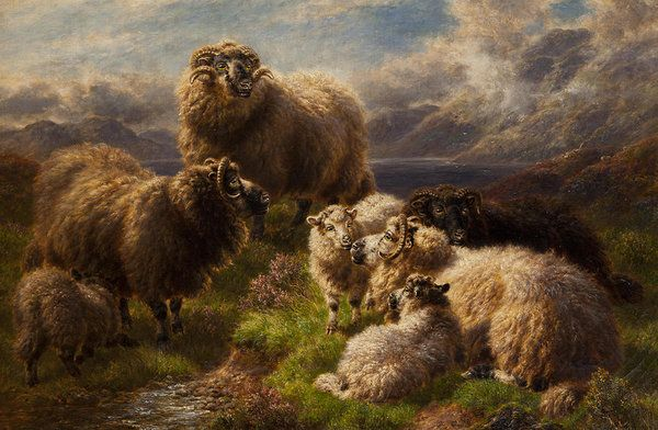 Highland Cattle Art Print by William Watson Highland