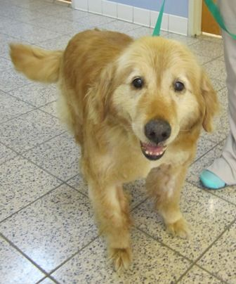 This Is Rusty Approx 8 10 Yrs He Was Picked Up As A Stray He Was Dehydrated Anemic His Kidney Values Were Slightly Off He S Been On Fl