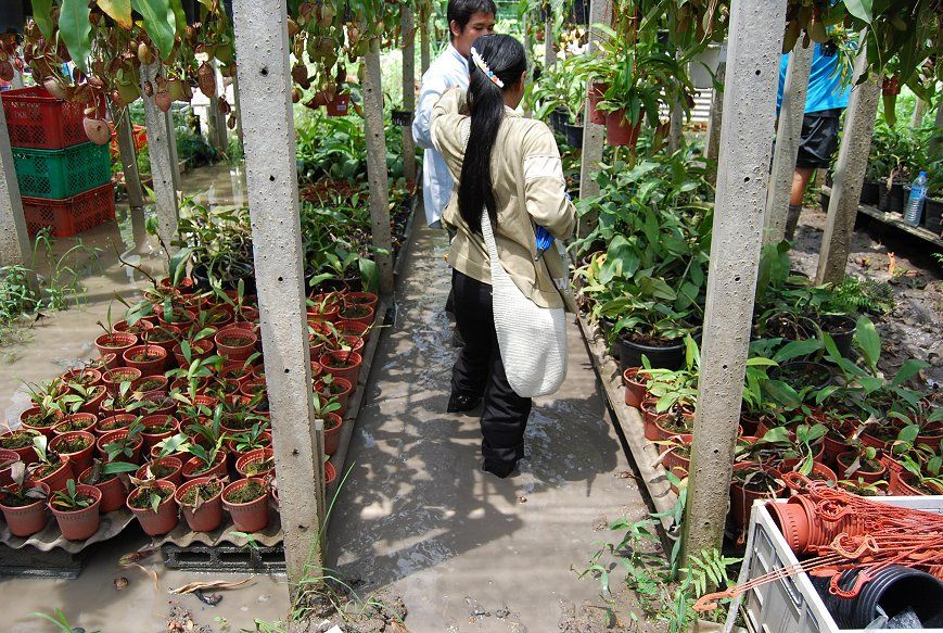 Exotic Plant Nursery Bangkok You Have To Love Mud