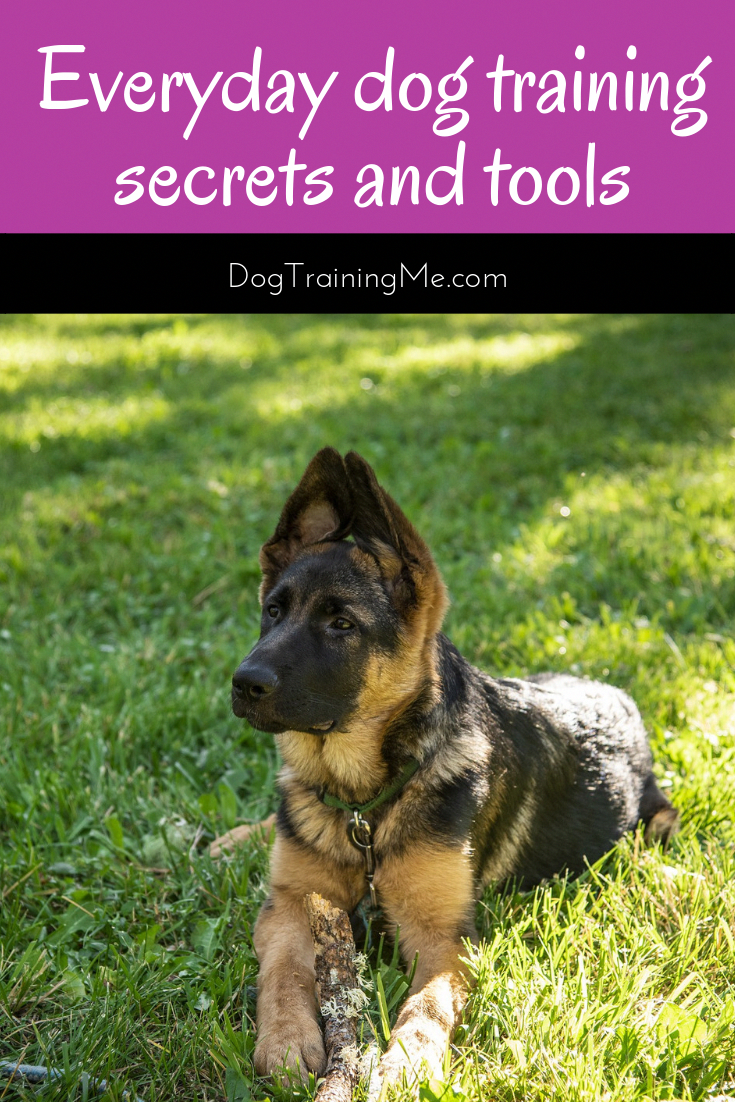 We have a free dog training resource guide to help you