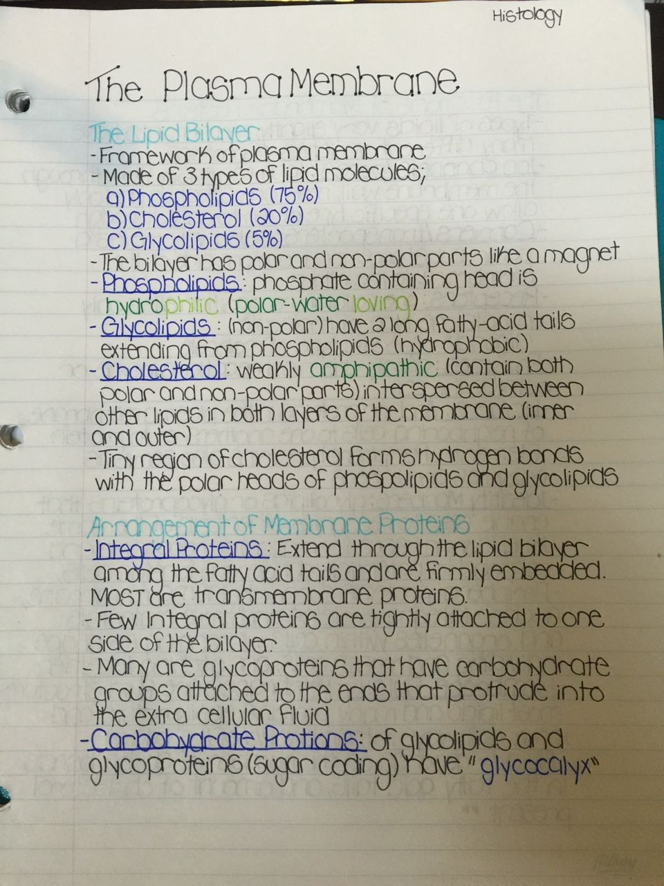 Handwritten Study Notes — Histology Course The Plasma