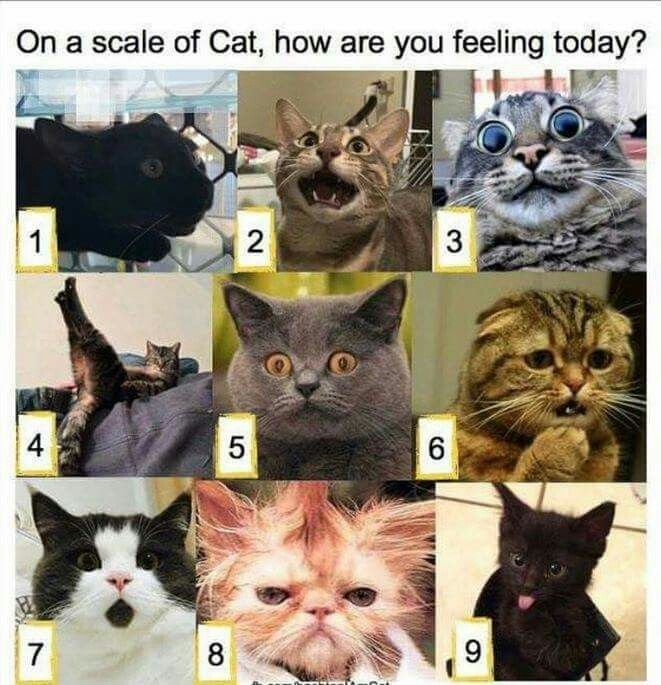 On The Cat Scale How Are You Feeling Today Cute Animals Cats Cute Cats