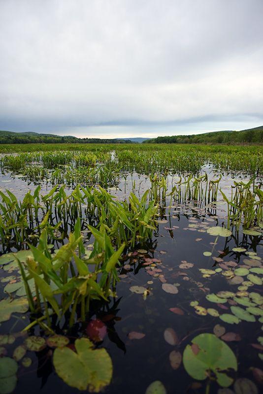 Pin by Hudson Valley Kayaks on Basha Kill Wetlands Preserve
