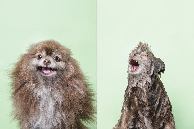 Chelsea Who Isn T Afraid To Tell You How It Really Is Scary Dogs Dog Pictures Dog Books