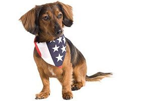 Pets And Pcs Orders Part 2 Tips For Military Families Moving