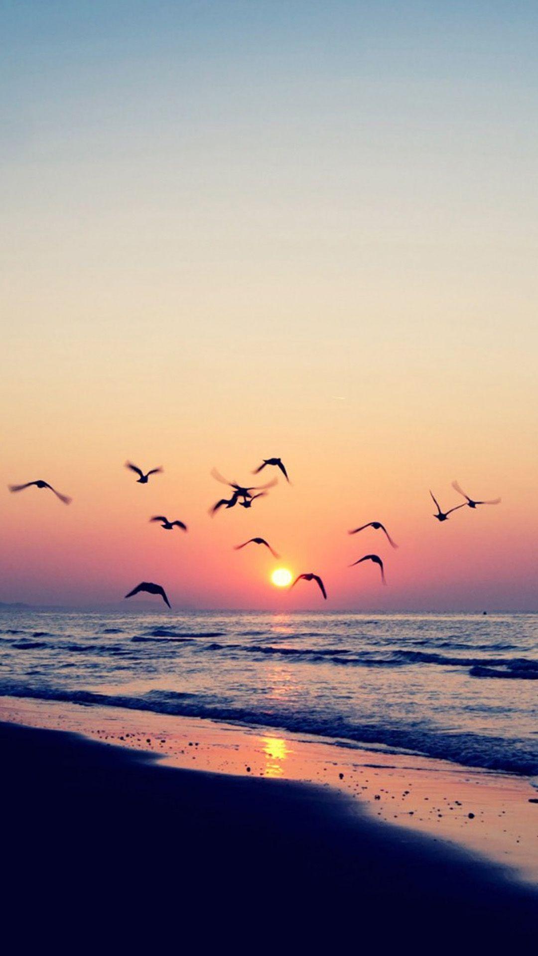 Twilight coast beach ocean wave seagull sunset iphone 6 - Twilight wallpaper for iphone ...