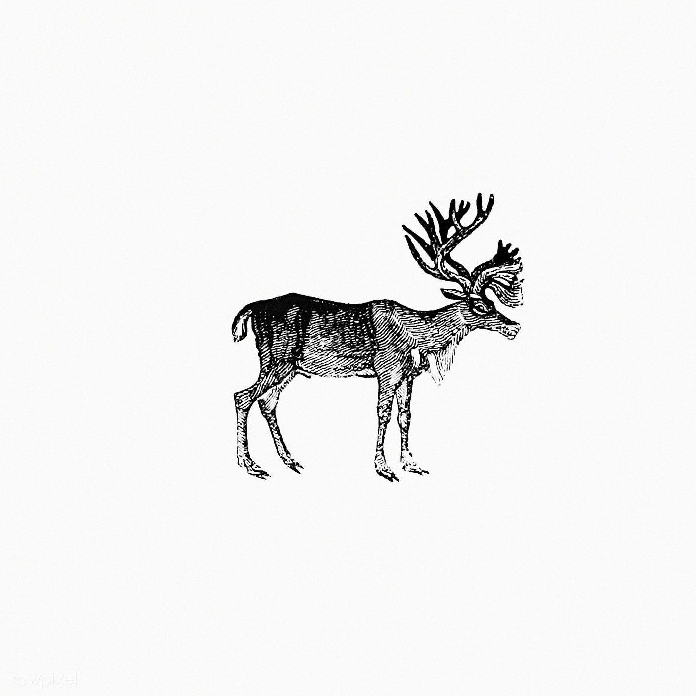 Download Free Illustration Of Reindeer Illustration From The Polar Regions Download Illustration Polar R In 2020 Free Illustrations Illustration Vintage Reindeer