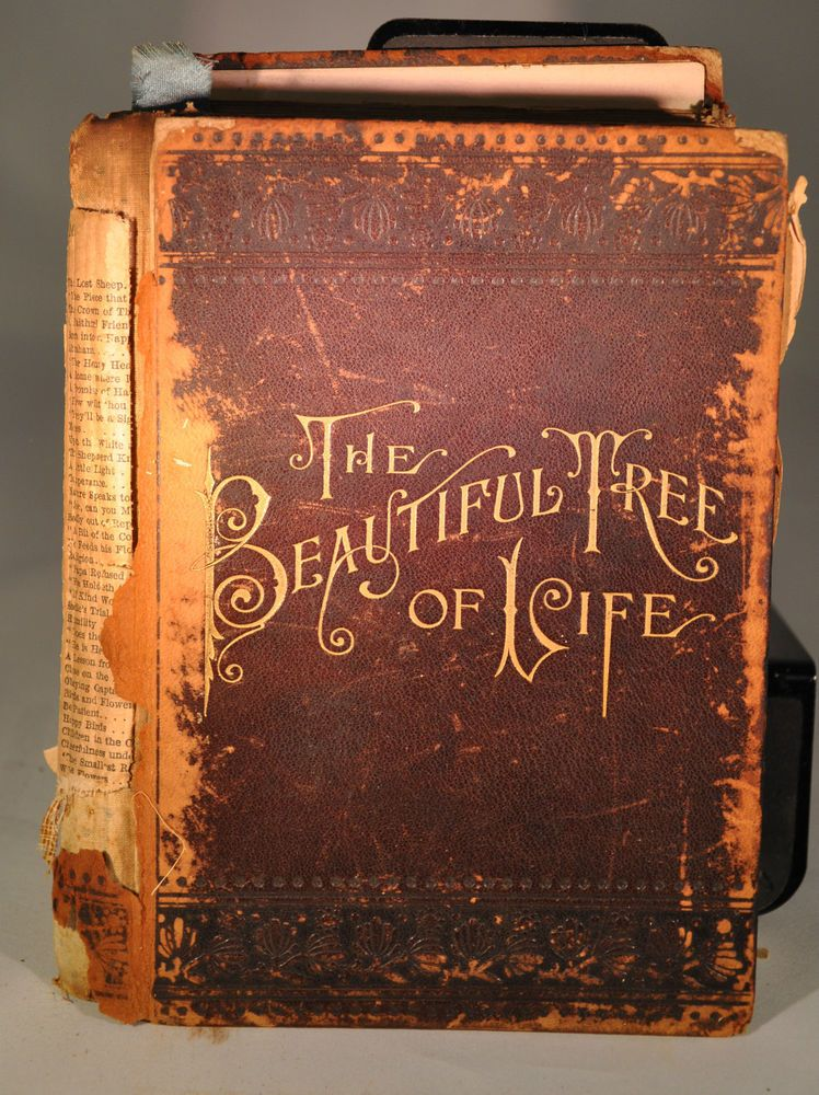 "...•ᘛ Thistle ★ Sisters ᘚ•...  ""Antique 1891 The Beautiful Tree of Life, Hardback Leather Cover."""