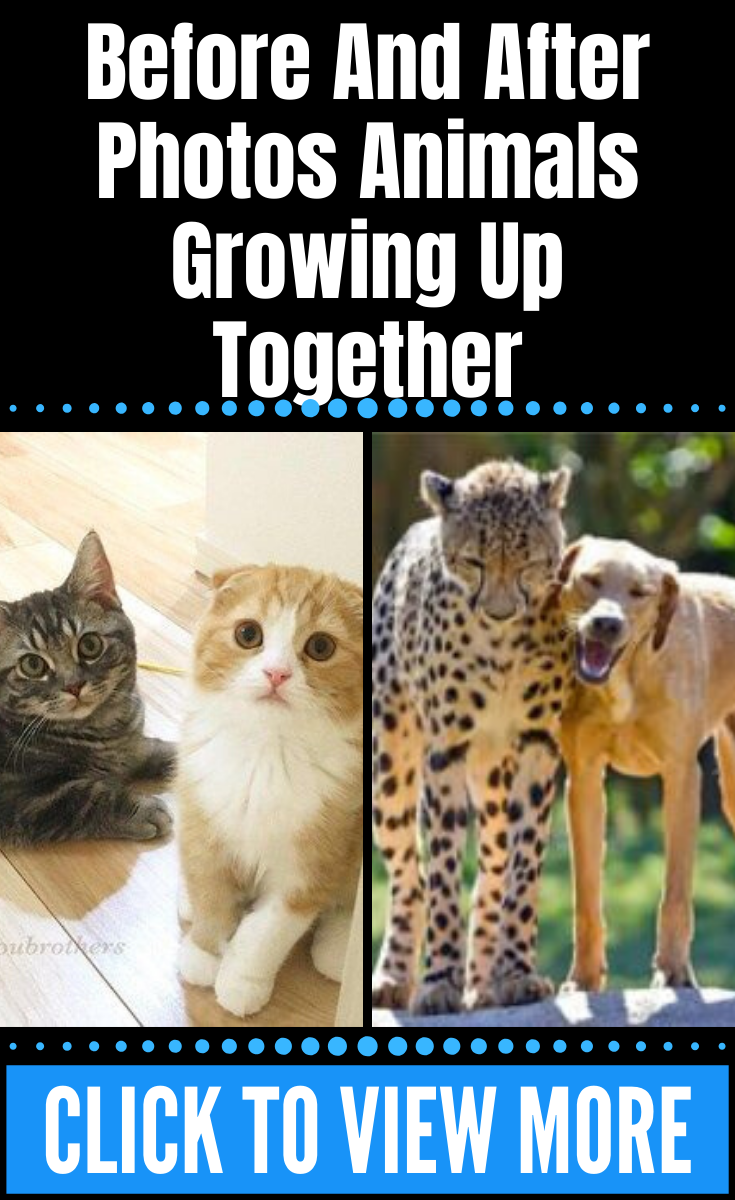 Before And After Photos Animals Growing Up Together In 2020 Animal Photo Amazing Photography Photo
