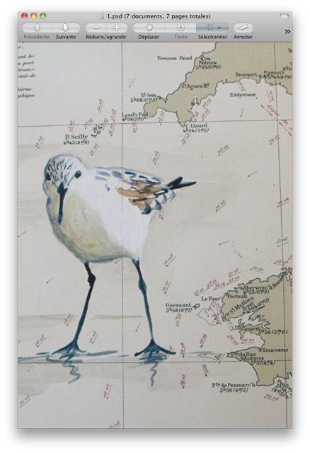 Becasseau Peint Sur Carte Ancienne Oiseau En Aquarelle Peinture