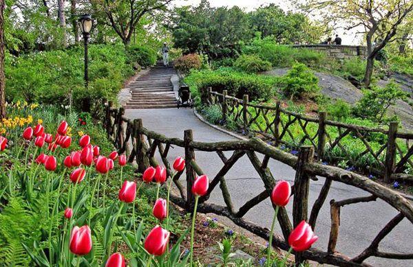 shakespeare garden central park wedding google search - Shakespeare Garden Central Park
