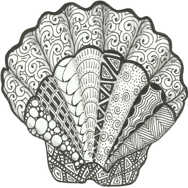 Scallop Seashell Art Decorative