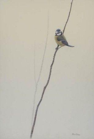 Pin On Birds Art رســـم طيــور