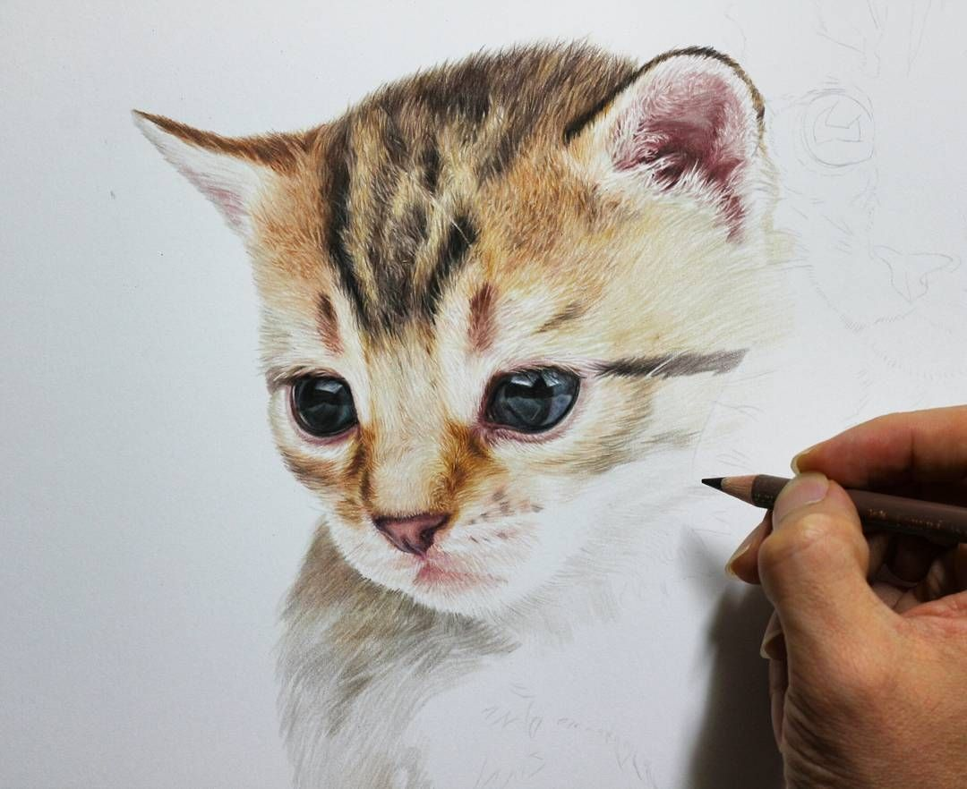 Cute Kittens And Puppies Drawings Puppy Drawing Kittens And Puppies Kittens Cutest