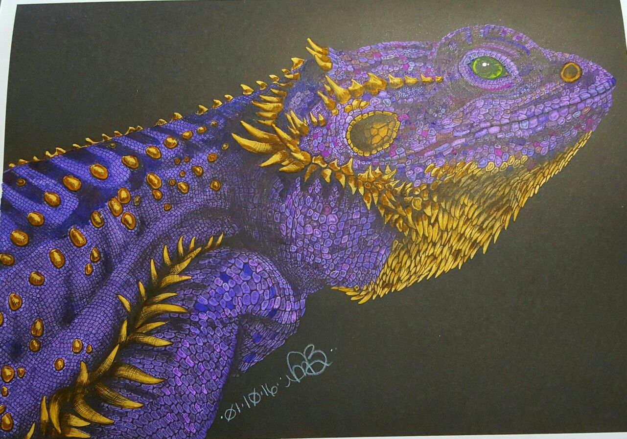 Bearded dragon from Tim Jeffs\' Intricate Ink Animals in Detail ...
