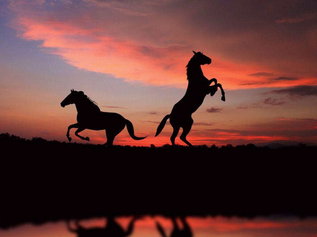 Beautiful Wallpaper Horse Sunrise - e2afc03ef2ebf3af53907ed6cb259b88  Pic_834065.jpg