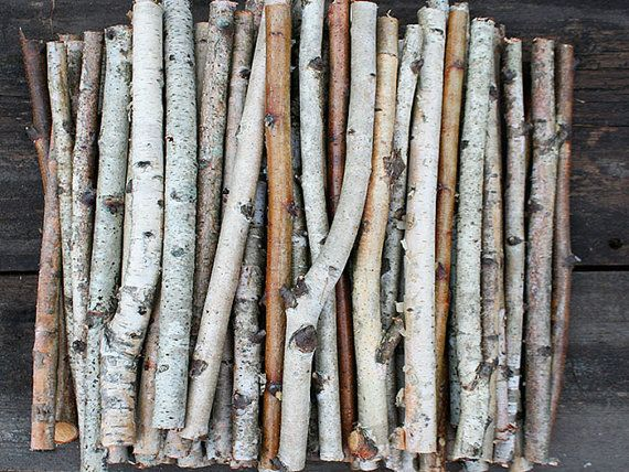 White Birch Branches Birch Wood Logs Paper Birch By Exstore