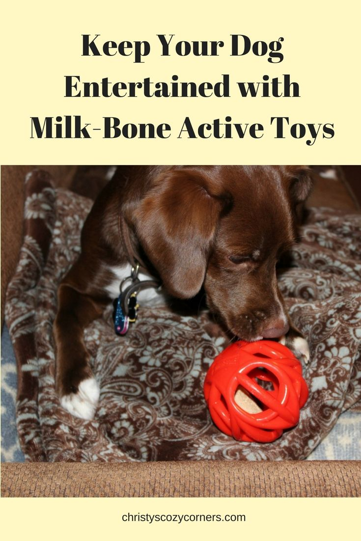 Keep Your Dog Entertained With Milk Bone Active Toys From Meijer