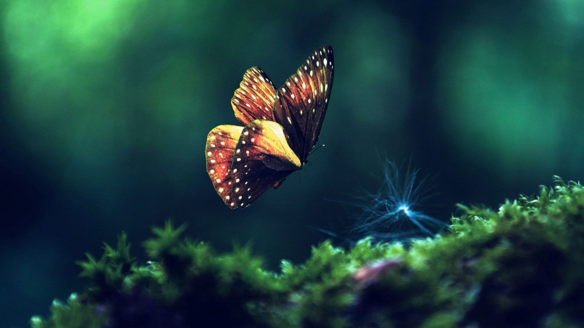 Beautiful Butterfly Macro Attractive Nature Hd Quality Desktop Background Wallpaper Hd 1080p Butterfly Wallpaper Live Wallpapers Aesthetic Wallpapers