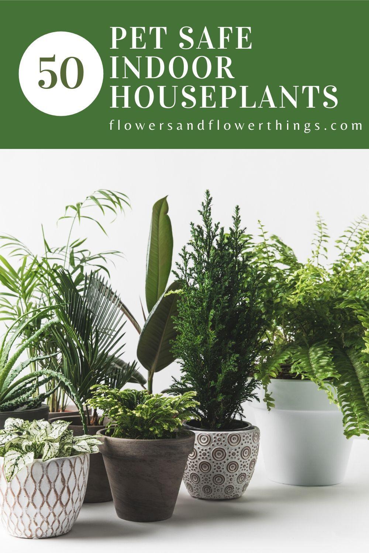 50 Pet Safe Indoor Houseplants Flowersandflowerthings Indoor Plants Pet Friendly Safe House Plants Dog Safe Plants