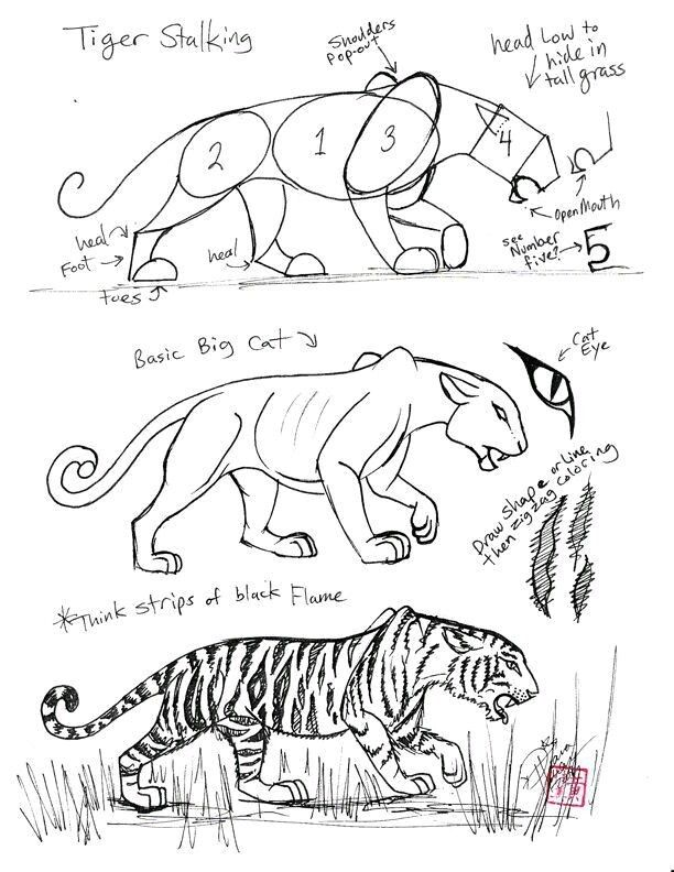 Pin By Remy On Want To Draw Animal Drawings Tiger Drawing Horse Drawings