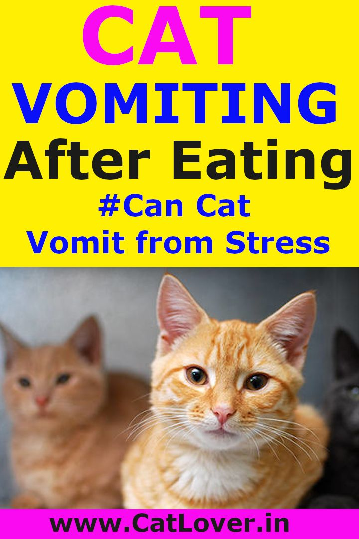 Pin on cat vomiting remedies natural