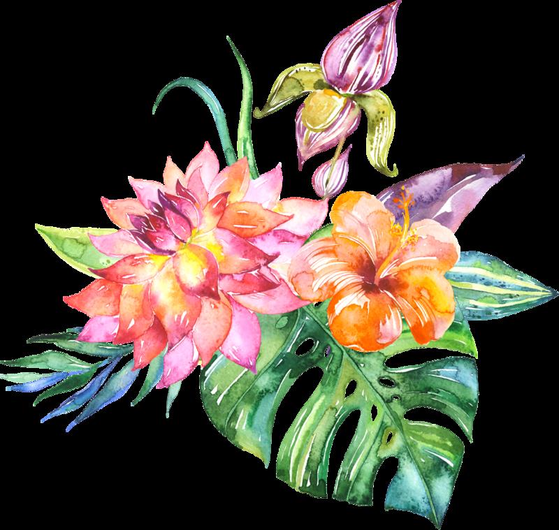 доски хорошие тропические цветы картинки нарисованые цель найти сохранить