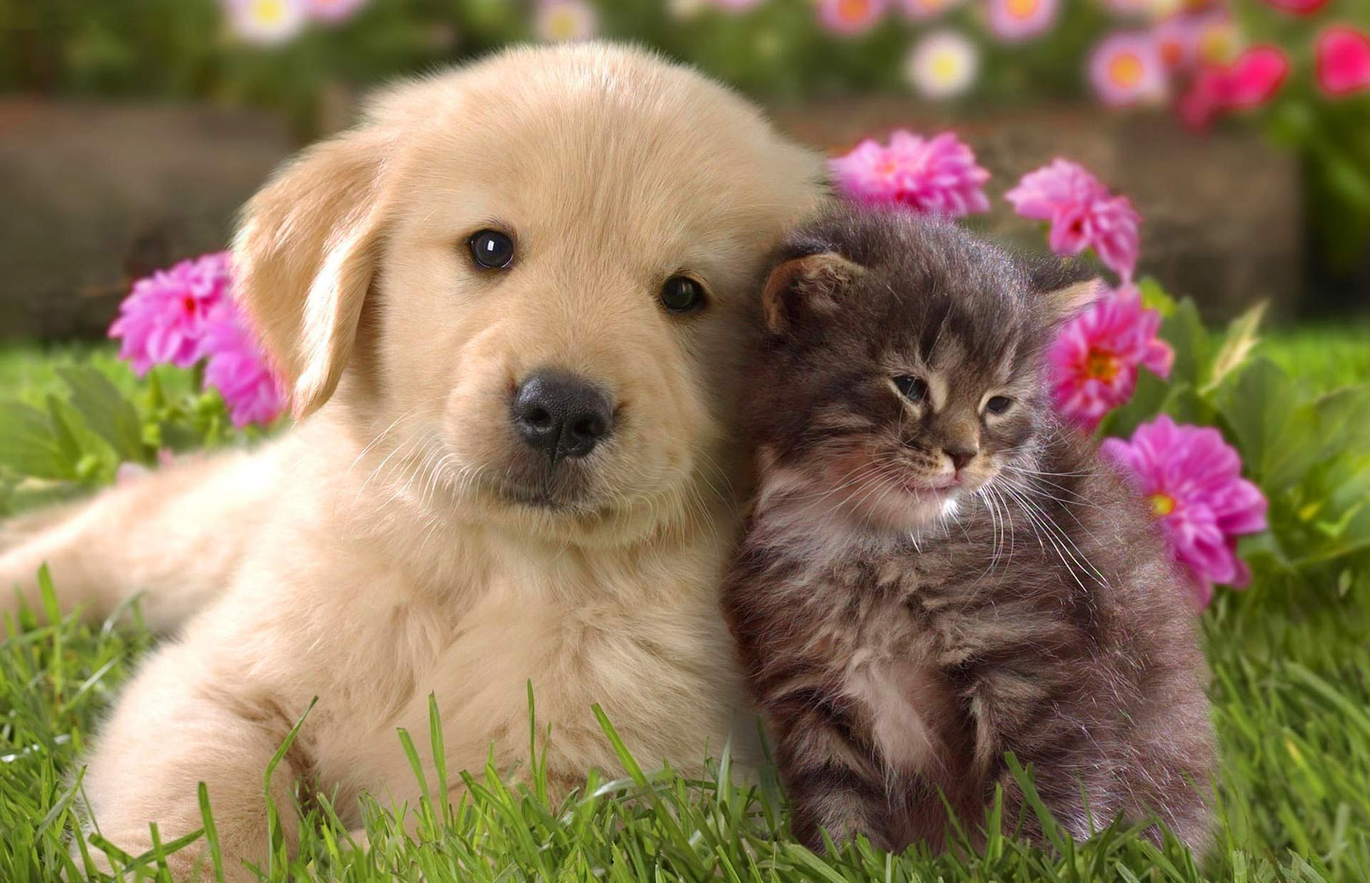Fondo Pantalla Perro Y Gato