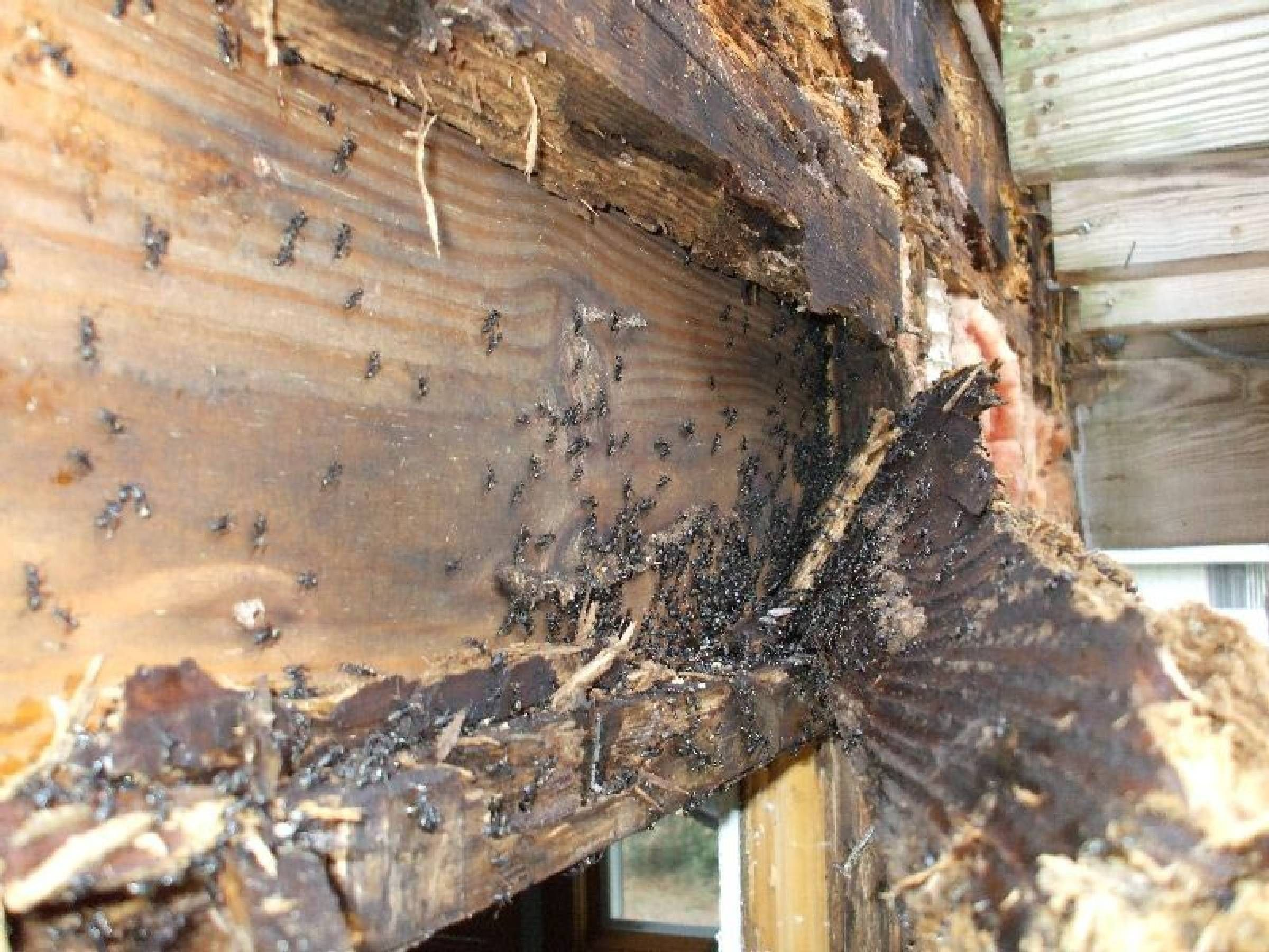 The Termite Bond And Repair Termite Damage Services Near Me Termite Damage Termites Termite Bond