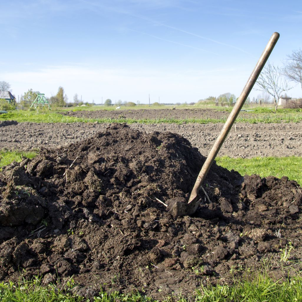 e2b140031407e3dc83b42edfb232d28b - Is Composted Manure Safe For Vegetable Gardens