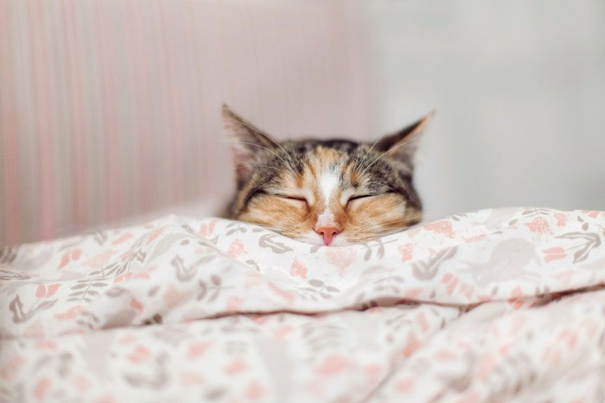 There S An Incredible Hack To Put A Comforter Inside A Duvet Cover Easily Pink Duvet Like A Cat Duvet Covers