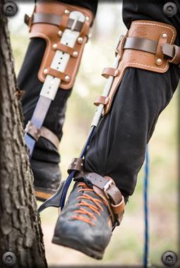 Tree Climbing Spikes Arborist Climbing Trees Arborist Climbing Tree Arborist