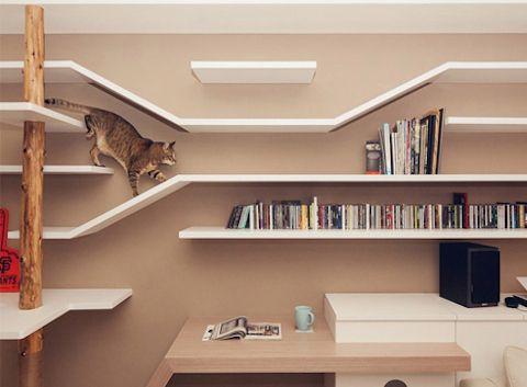 10 Fantastic Feline Friendly Interior Designs Shelves Cat and Books