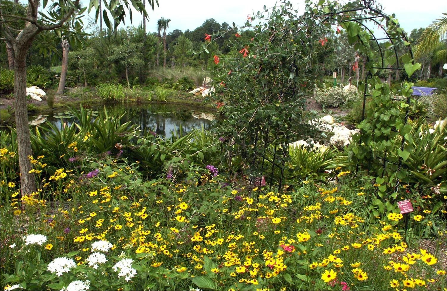 Butterfly gardens have continued to gain pority over the last ... on florida native gardening, florida native vegetation water, florida native yellow flowers, florida native grasses, florida plants, florida trees flowering perennial for hummingbirds,