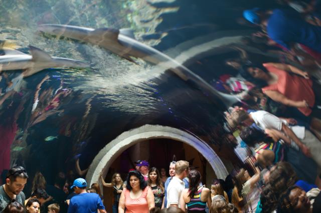 Dallas Aquarium Discount Ticket