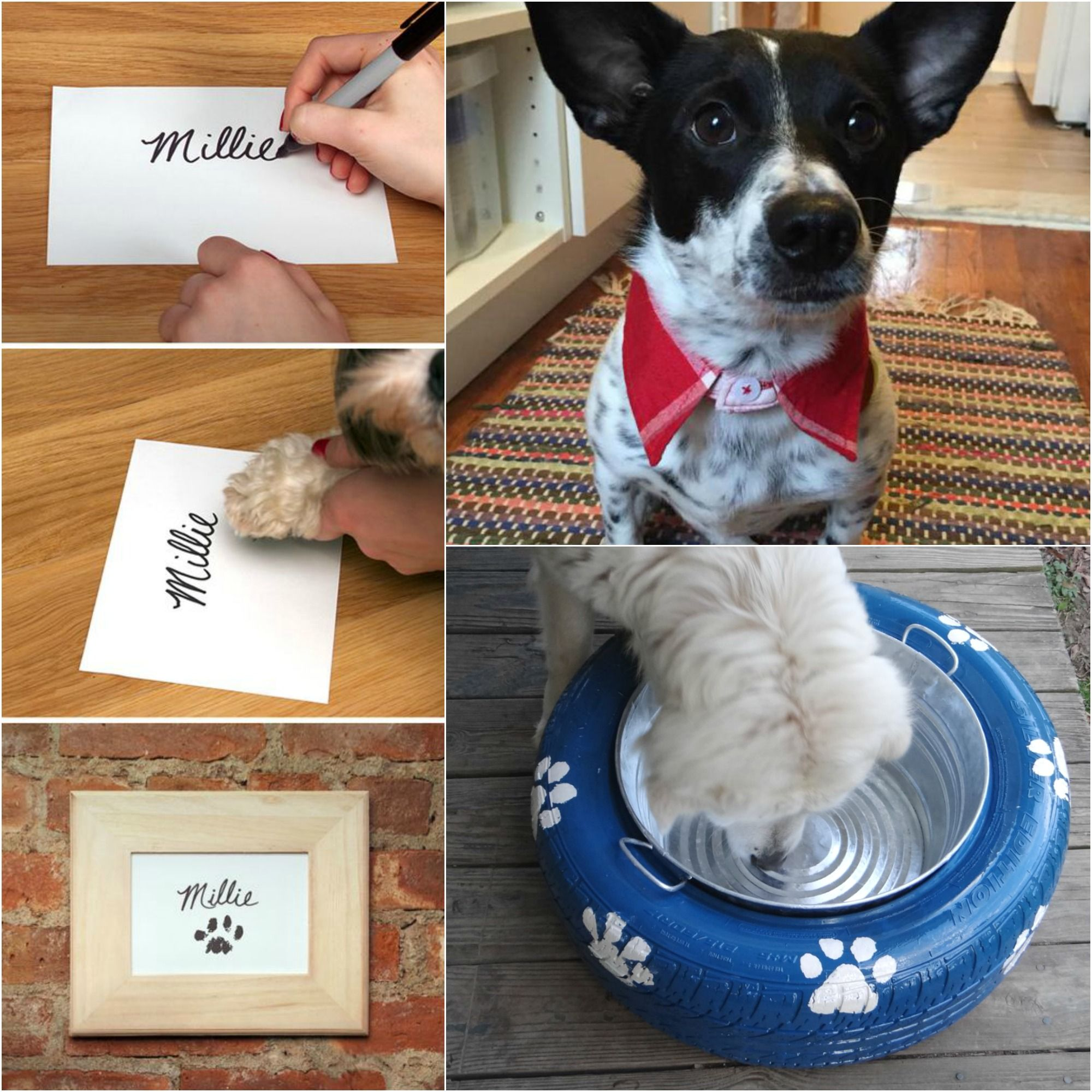 10 DIY Projects for Dog Lovers