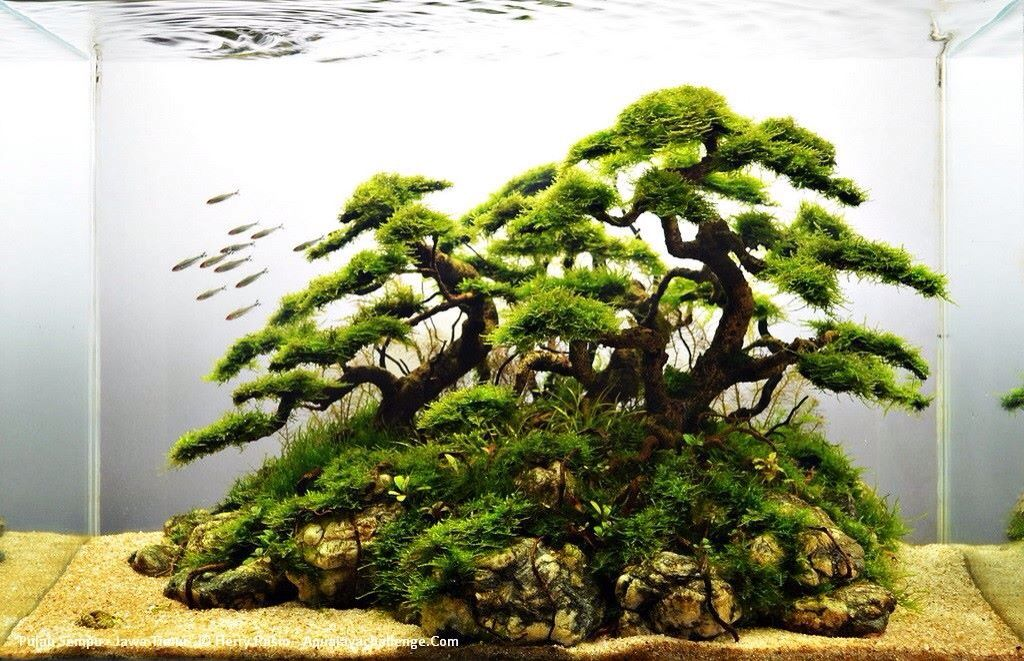 Driftwood and java moss faux bonsai aquaria and for Vendita online bonsai