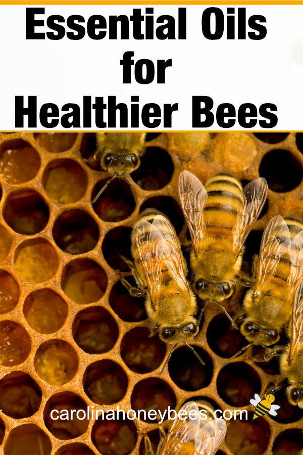 Essential Oils for Healthy Bees