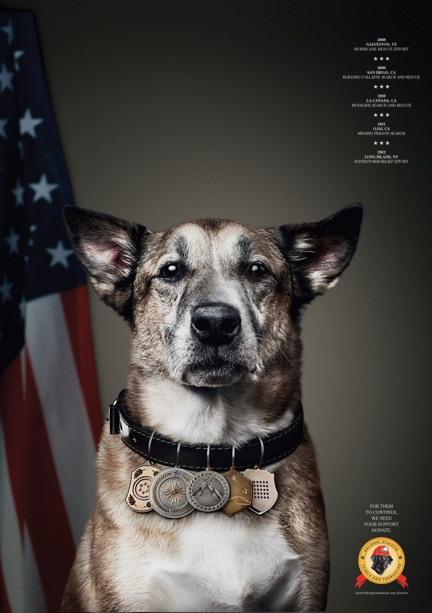 National Disaster Search Dog Foundation Print Ads Communication Arts Print Ads Dog Search Dogs