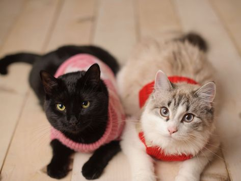 Sweaters for Cats Do They Need Them? petMD Cat