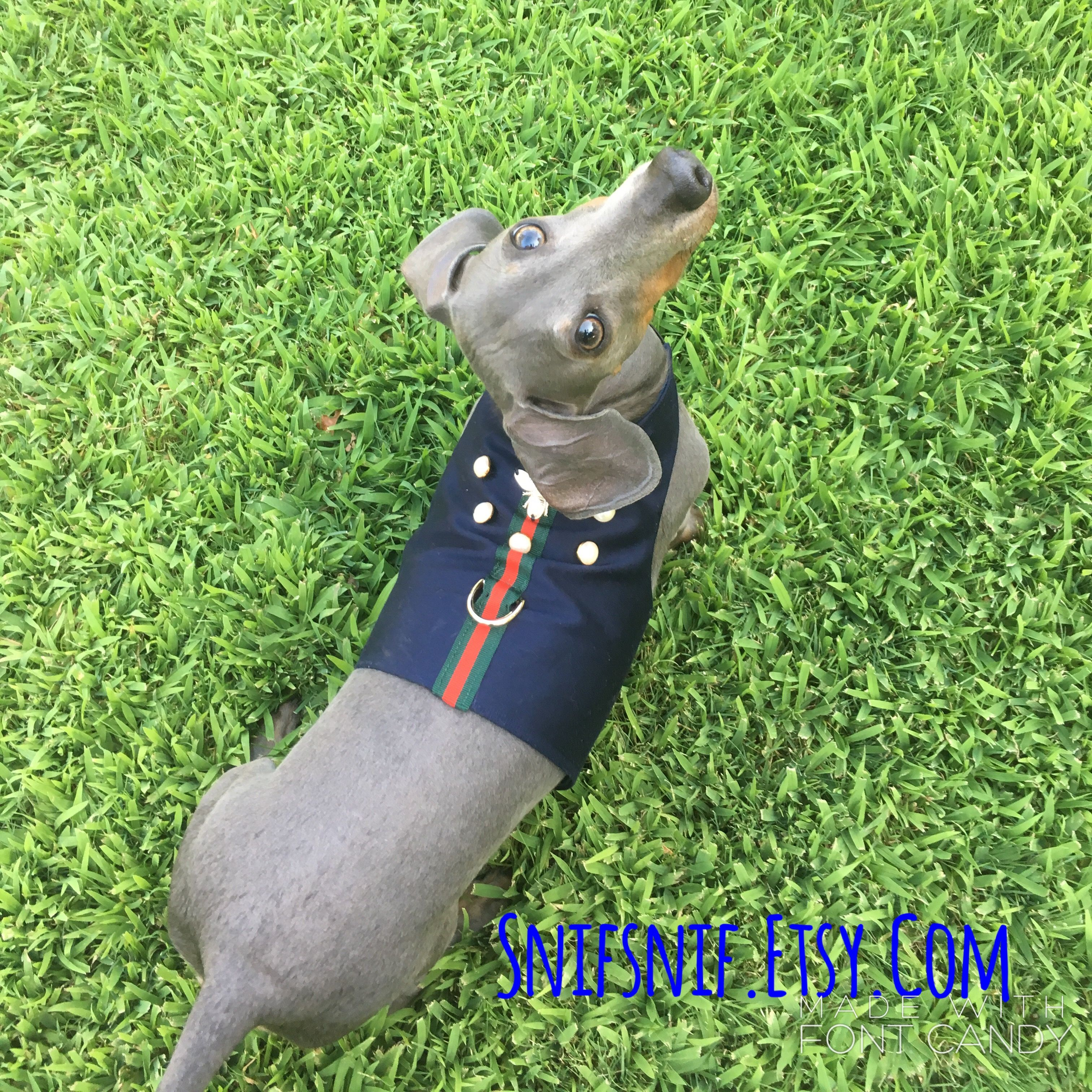 Pin by SNIFSNIF on Blue Dachshund (With images) Blue
