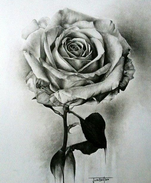 Explore pencil drawings of flowers rose drawings and more