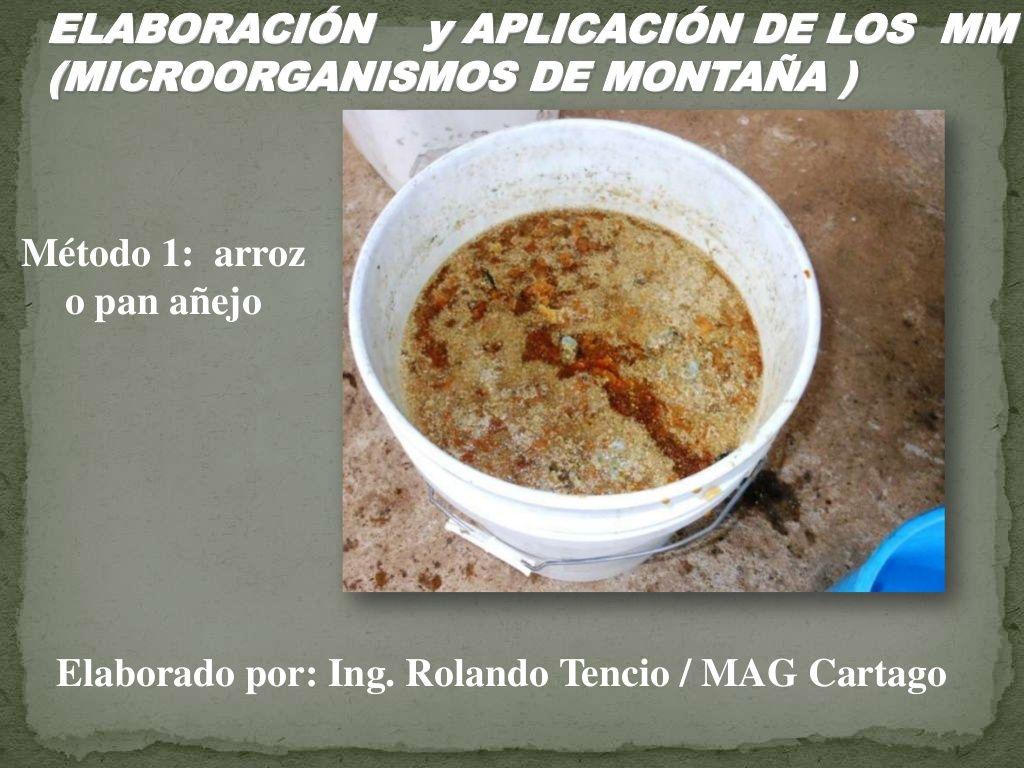 Elaboracion y aplicaciones de MM (Microorganismos de Montaña)  con arroz  by Rolando Tencio via slideshare